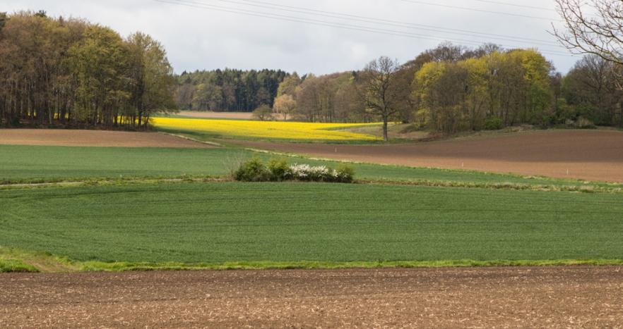 20160428b_Lyneburg-2470.jpg
