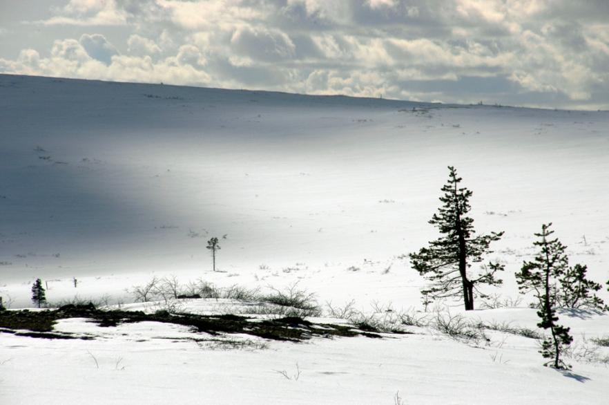 20100423_LAPPI_Saariselkä_ (1752).JPG