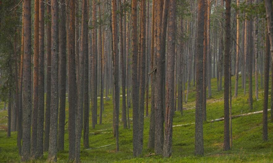 20100730c_Hossajarvi_ (1570).jpg